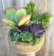 Succulentcork.png