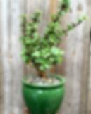 Succulent arrangment, Succulents