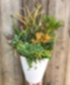 Succulentwhite2.jpg