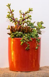 Custom plant designs