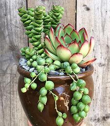 Succulent plant designs