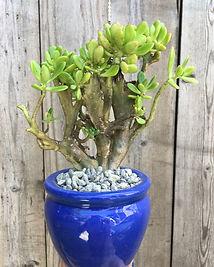 Custom designs, succulent designs