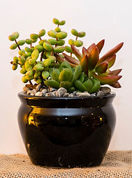Custom plant arrangements