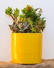 Custom succulent arrangements
