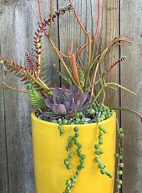 Custom succulent designs