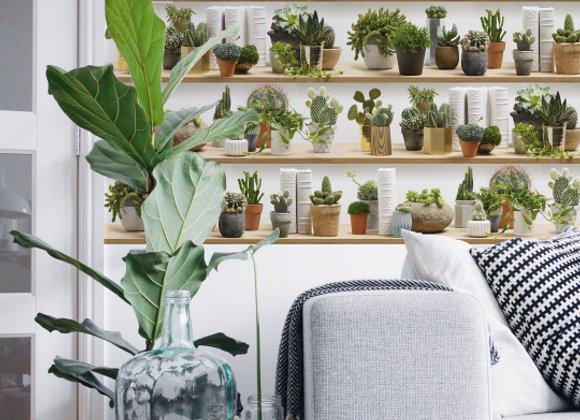 Papier-peint Cactus Koziel