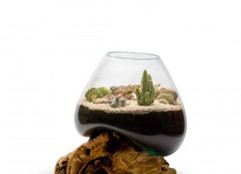 Terrarium Cactus Amazonia XL