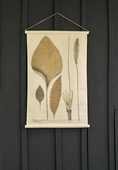 Ruppia Canvas Wall Hanging