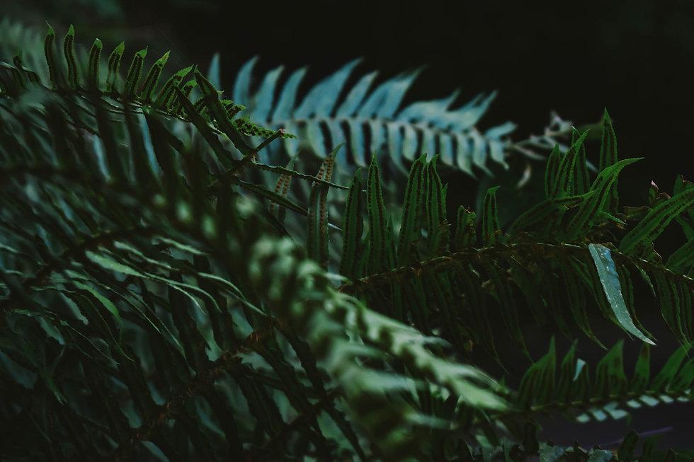 moody tropical fern plants