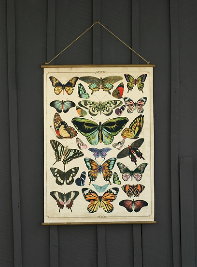 Trophia Butterfly Canvas