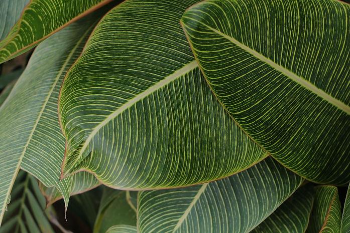 lush tropical leaves