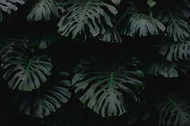lush moody tropical leaves
