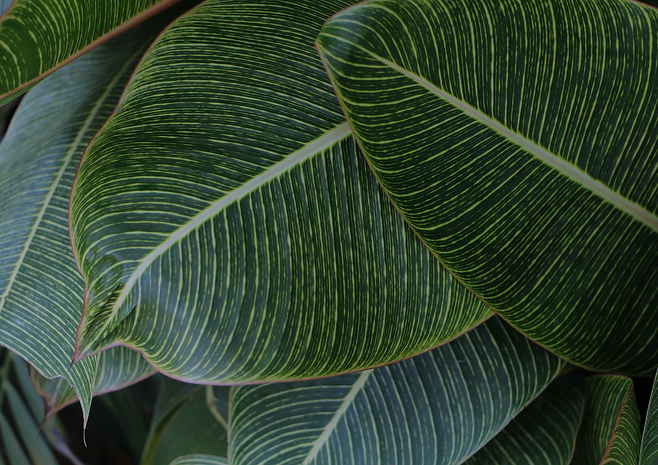 tropical%20leaves_edited_edited.png