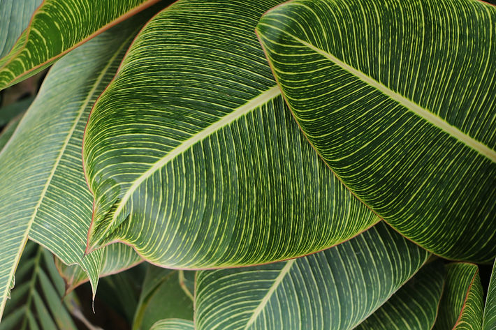 tropical leaves | harbor 17