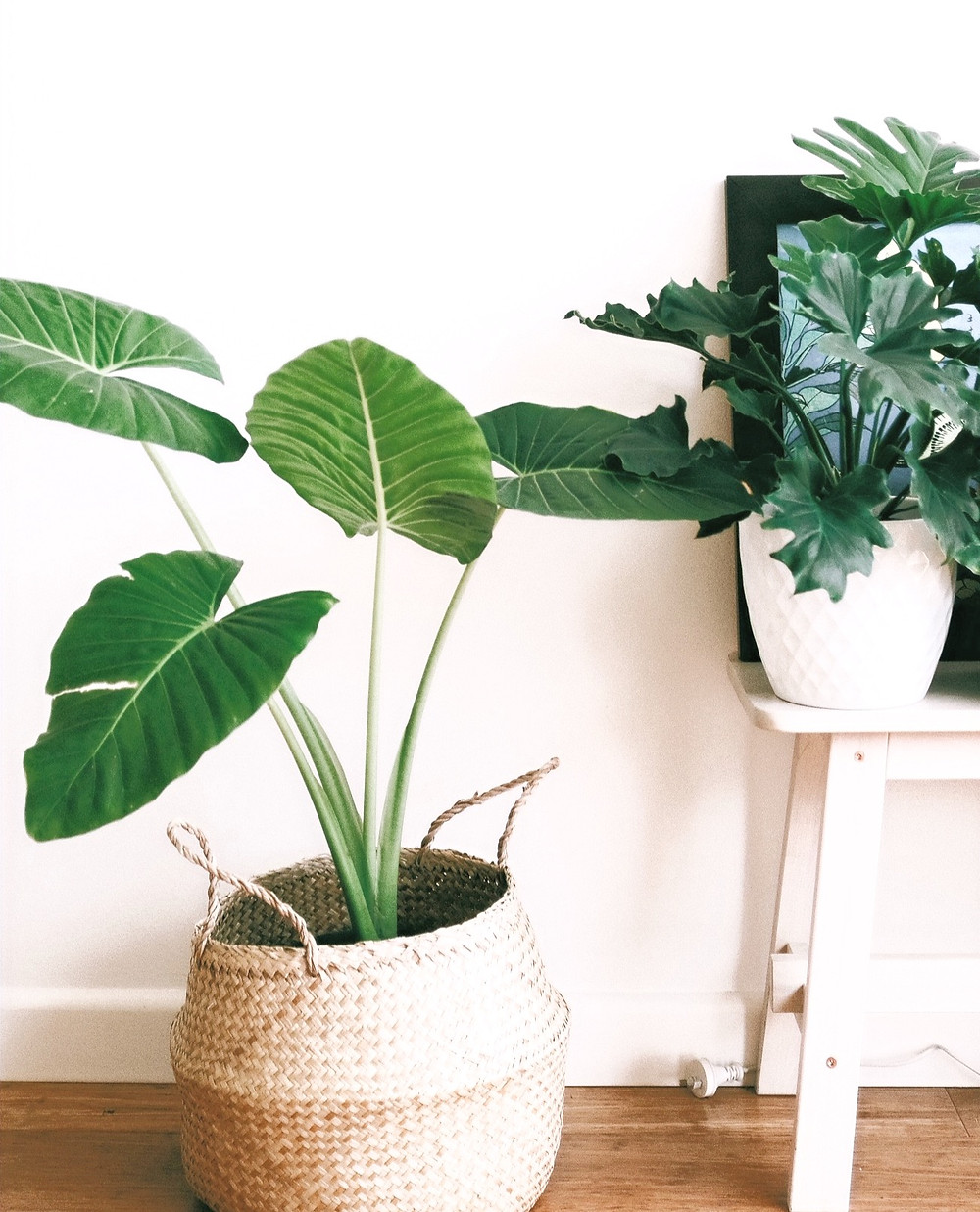 Modern leafy tropical indoor plants in boho basket.