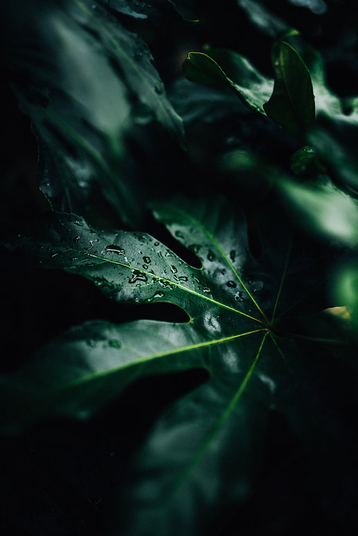 moody tropical greenery with dew