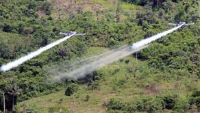 Tribunal Superior de Distrito Judicial de Pasto suspende fumigación con glifosato: análisis jurídico