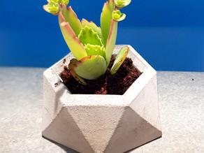 איך להכין עציץ בטון עם תבנית סיליקון קנויה