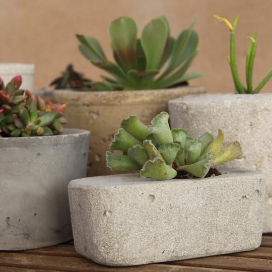 maceta de cemento con planta suculenta