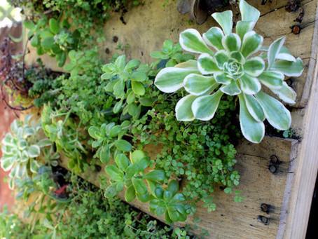 Jardín vertical en palé reciclado