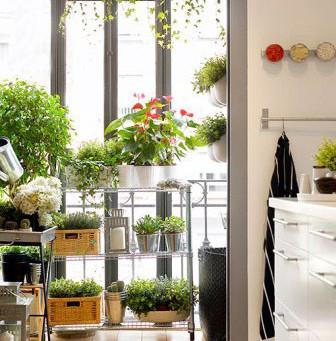Jardineros de ciudad: 6 plantas que crecen solas