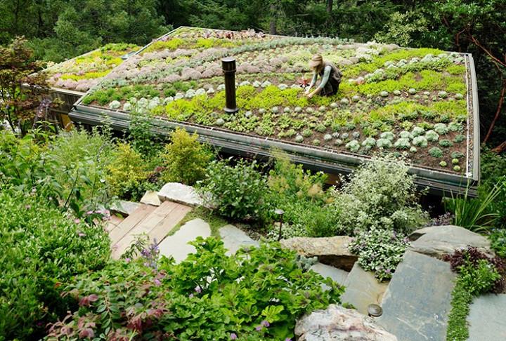 green roof feldman architecture.jpg