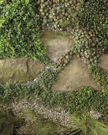 paseíto con plantas de suelo
