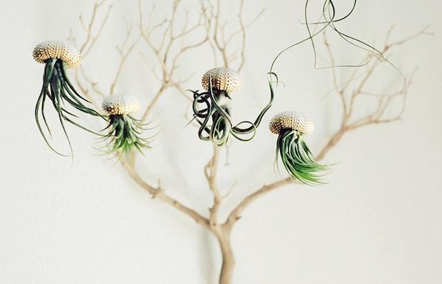 Medusas con encanto