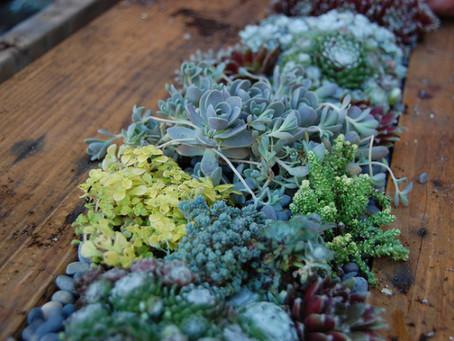 Mesa con jardín