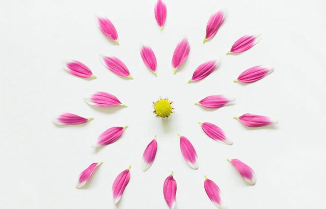 Flores que nacen, crecen y ¡boom!