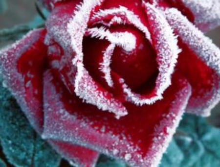 Vuestras plantas no volverán a pasar frío