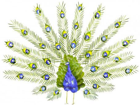 Pétalo: cada una de las piezas de que está cubierto el cuerpo de las aves