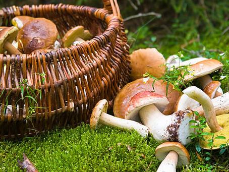 La economía del champiñón sostenible