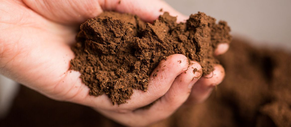 Convierte tus desechos en fertilizante para plantas