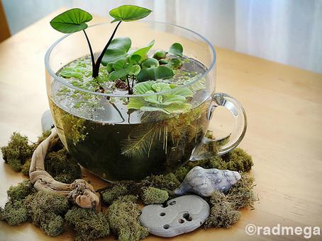Mini estanques en tazas de café