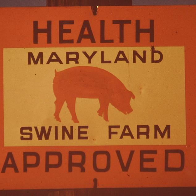 Hog Farming