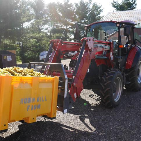 Robin Hill Chardonel Harvest
