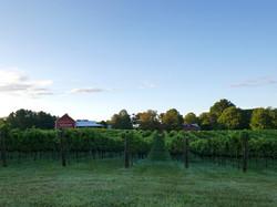 Robin Hill Harvest Morning