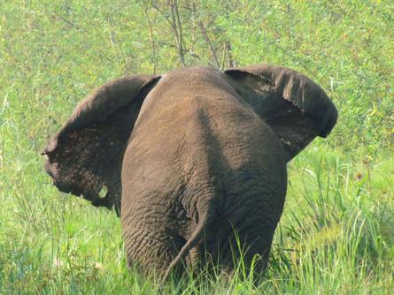 An Elephants Tooth