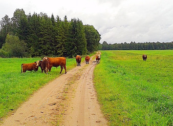 "August 27, 2017 / Tartu, Estonia / FREE guided gravel cycling ""Moo"" ride"