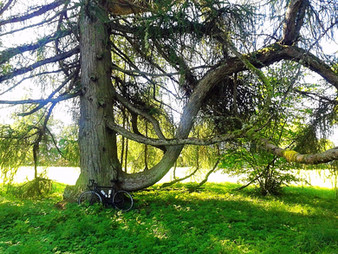 "September 17, 2017 / Tartu, Estonia / ""The World Tree"", FREE guided gravel cycling ride"