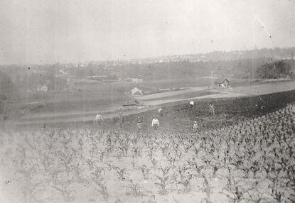 picardo westward 1920.jpeg