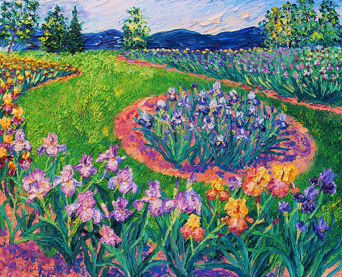 Schriener's Irises