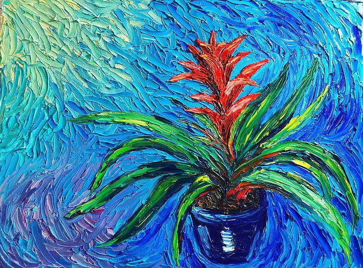 Crimson Bromeliad