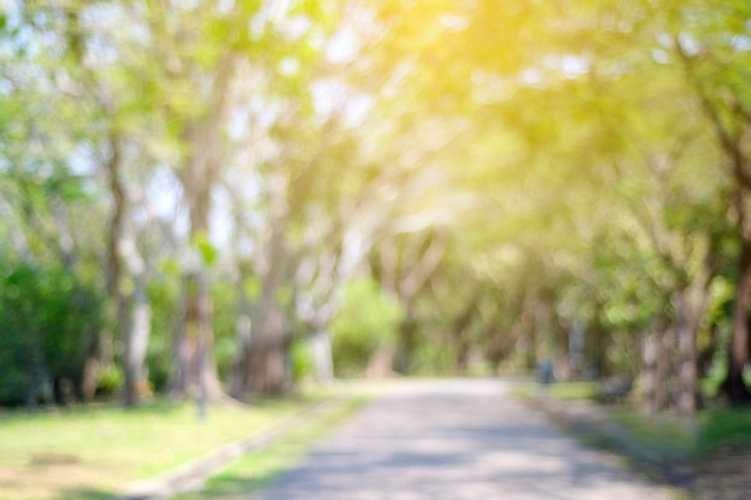 blurred-park-with-bokeh-light-nature-bac