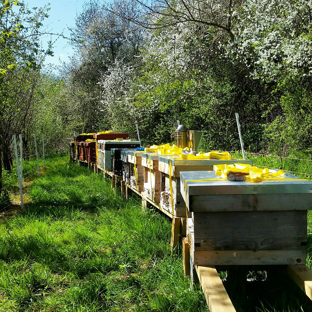dunmow bees.jpg