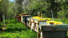 Busy week on the bees!