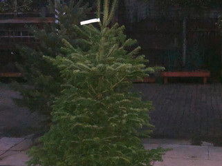 Last chance for real Christmas trees!