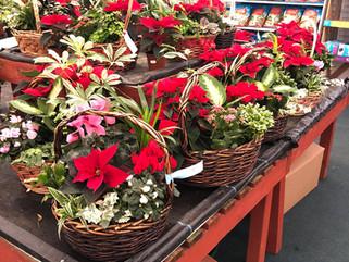 Christmas Giftware & House Plants
