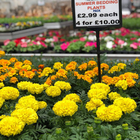 Great prices on summer bedding